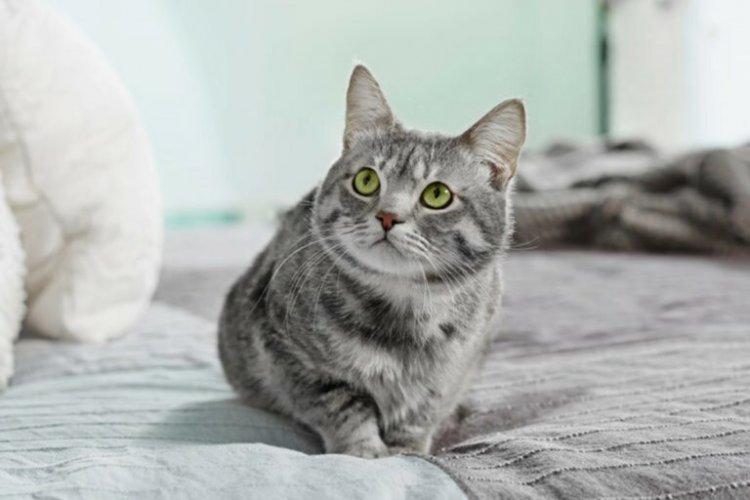 Firenze. Cinese 26enne , denunciato ha appeso un gatto al balcone.