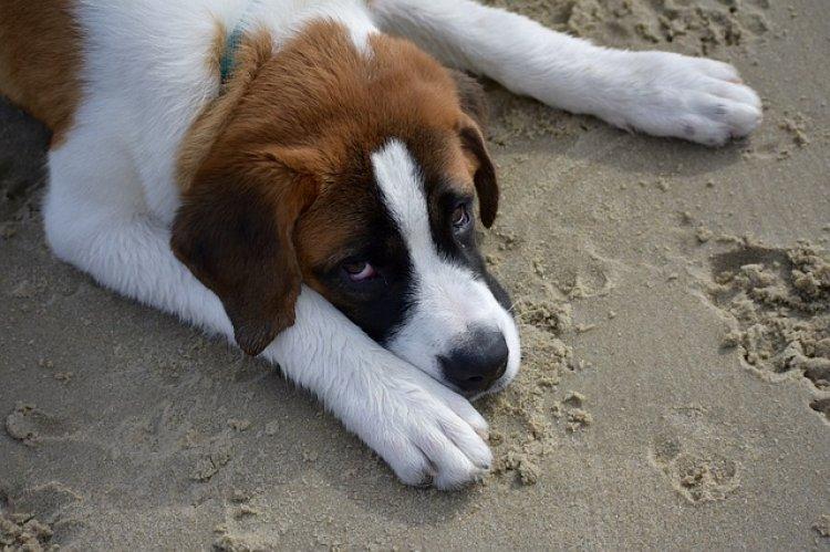 Diano Marina, (IM) il sindaco vieta ai cani l'accesso nelle spiagge libere