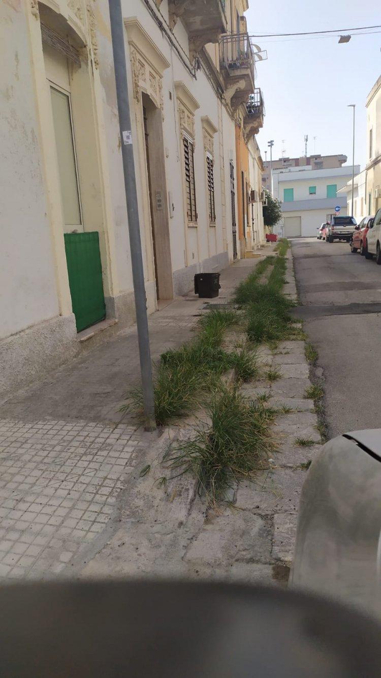 La periferia della città di Lecce invasa dalle erbacce.