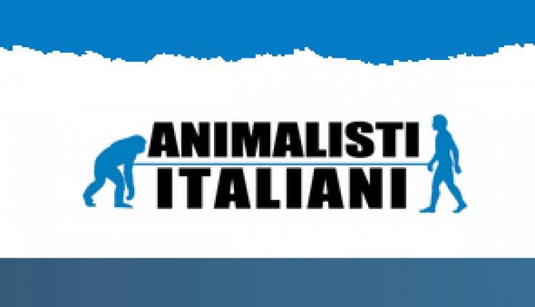 Cacciatori assassini : usano cuccioli di volpe come esca e lo fanno morire fra atroci sofferenze !