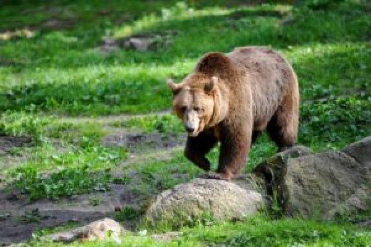 Trento, non c'è pace per l'orso