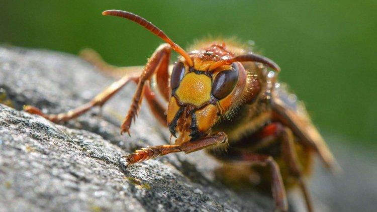 Attacco di calabroni in Baviera: aggrediti giovane madre e altri passanti.